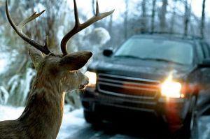 deer-682198212